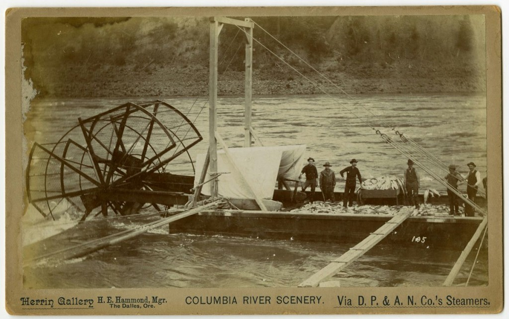 """One Night's Catch""; Salmon Fish Wheel and Operators in The Dalles, Oregon, 1894 from D.C. Herrin ""Columbia River Scenery"" Photographs (C1512)."