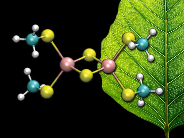 [2Fe–2S] cluster in front of a leaf. (Image by C. Todd Reichart)
