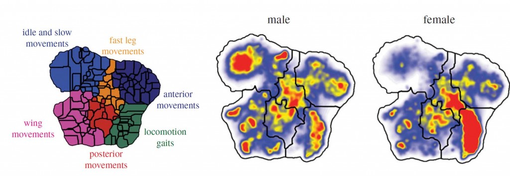 Map that indicates the type of movements of a fly.