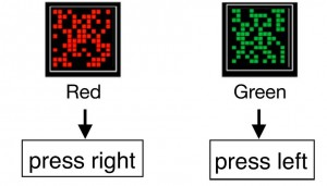 Volunteers played a game where they had to press one button or another depending on the location of squares on a screen. Participants that switched to a strategy based on the color of the square were able to improve their performance on the game. (Image source: Schuck, et al.)