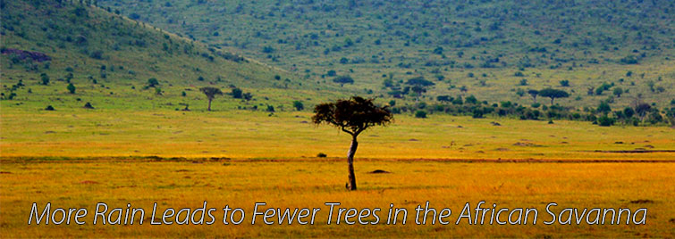 Lone tree on savanna