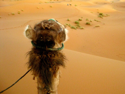 Bordewich_camel.jpg