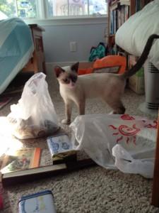 James examining piles of unpacked Jishou goodies