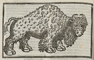 [American Bison]. Francisco López de Gómara, Historia general de las Indias (Caragoça, 1553).