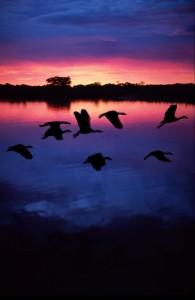 Flock behavior