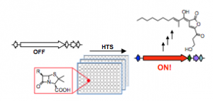 High-throughput screening for the discovery of small molecules that activate silent bacterial gene clusters